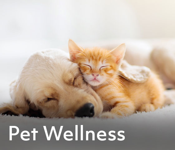 Care for your pets makes cents. Get reimbursed for:   Vet bills from routine checkups, emergencies, vaccinations, spay/neuter and medication/prescriptions Grooming, boarding, and training costs Adoption fees from shelter or rescue groups